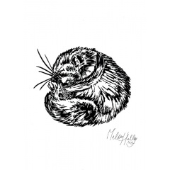 greetingcard_sleeping__dormouse_melissa_halley