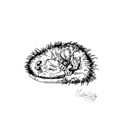 greetingcard_sleeping__opossum_melissa_halley